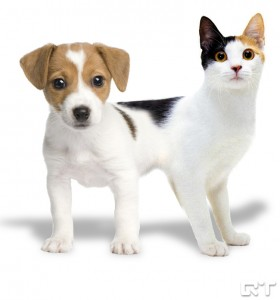Zdroj: http://q-target.co.uk/animanglezoo/catdog/
