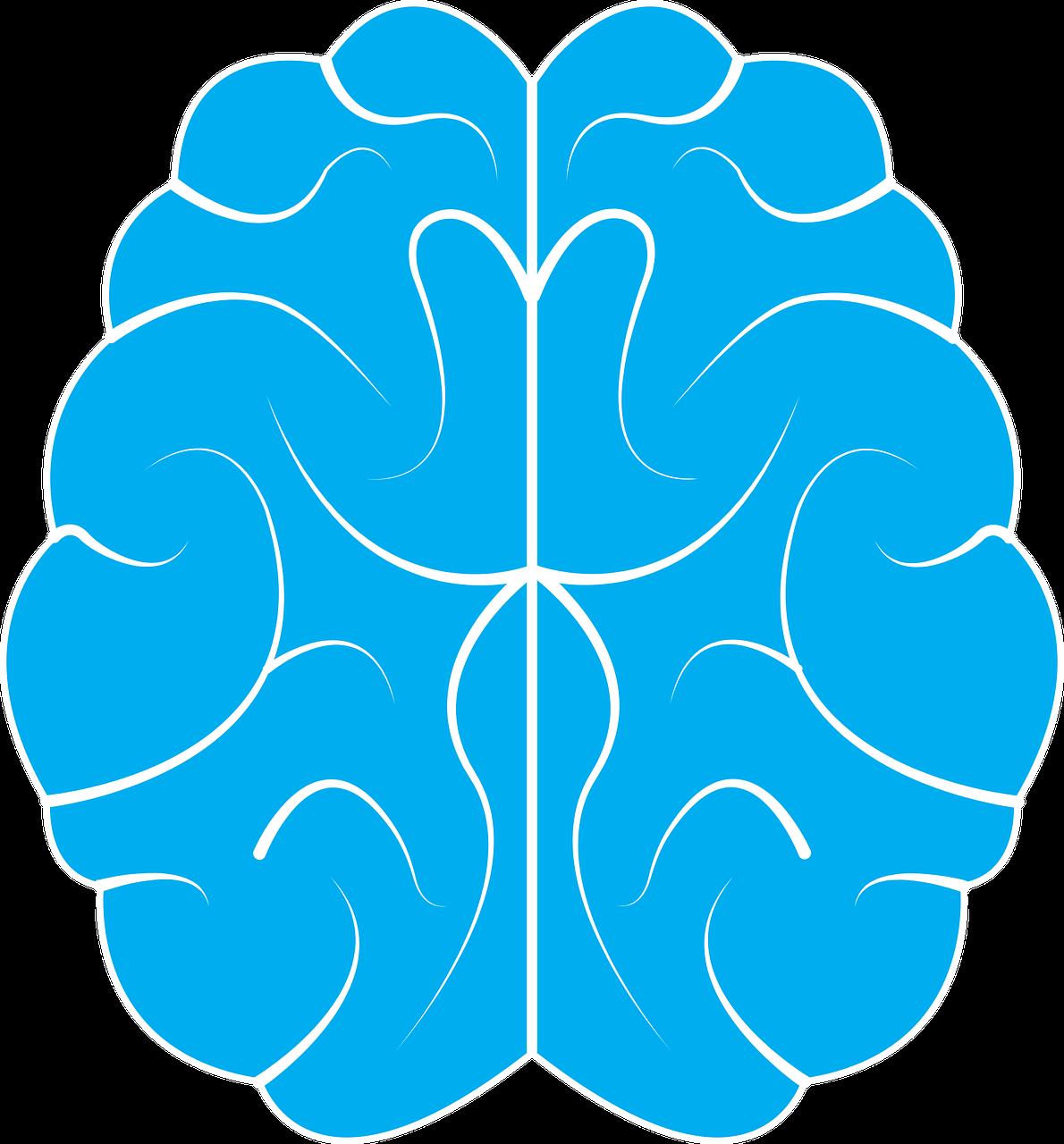 brain-1710293_1280